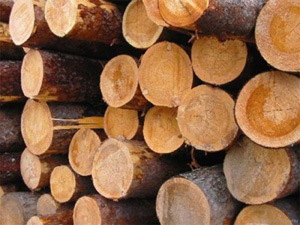 ДРЕВЕСИНА как конструкционный строительный материал Древесина имеет трубчатое слоисто волокнистое строение В поперечном разрезе ствол дерева состоит из коры тонкого слоя камбия заболони ядровой части и